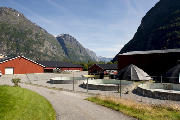 Sunndalsøra in Norway:  Benchmark Holdings has invested heavily in breeding and genetics, after purchasing Salmobreed and Akvaforsk Genetics Center, both entities spinned off from Norwegian breeding research.