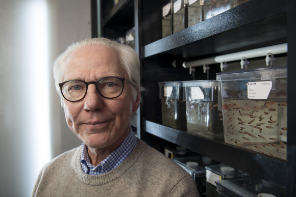 Professor Peter Alestrøm, NBMU: - In my mind, it is completely idiotic to ban research on genetically modified fish. In stead, we could have patented the fish here in Norway and via this patent controlled how it was used. Photo: Gorm K. Gaare.