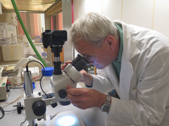 Professor Tor Einar Horsberg research the sea lice. Picture: Tellef Øgrim.